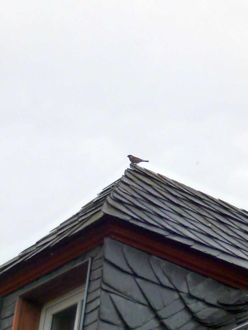 Auf Dem Dach : spatz auf dem dach 2 spatzenhaus ~ Frokenaadalensverden.com Haus und Dekorationen