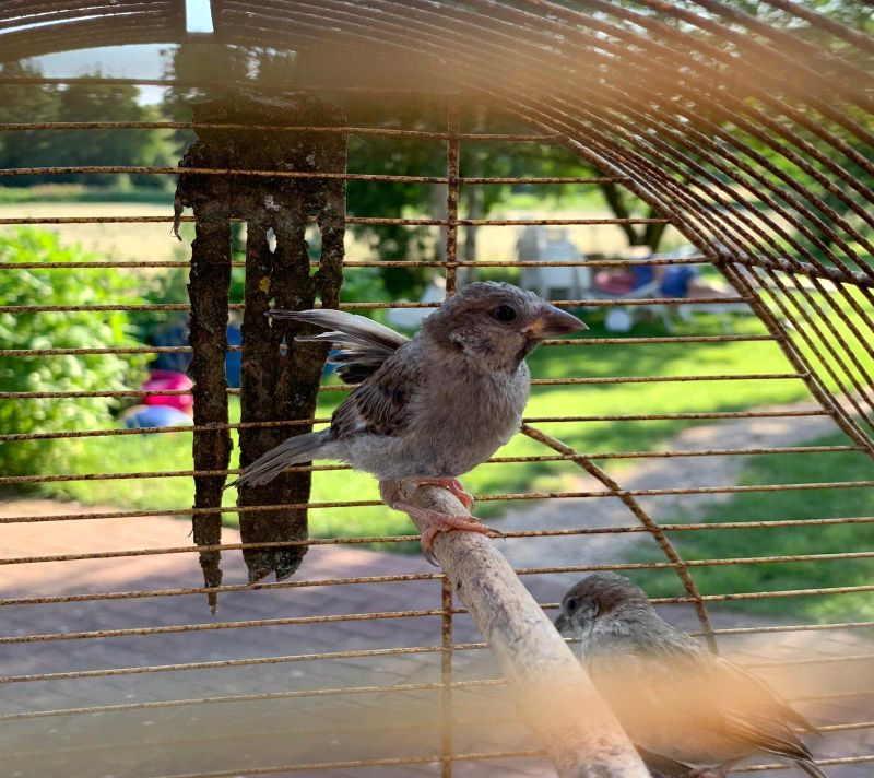 Fundvogel